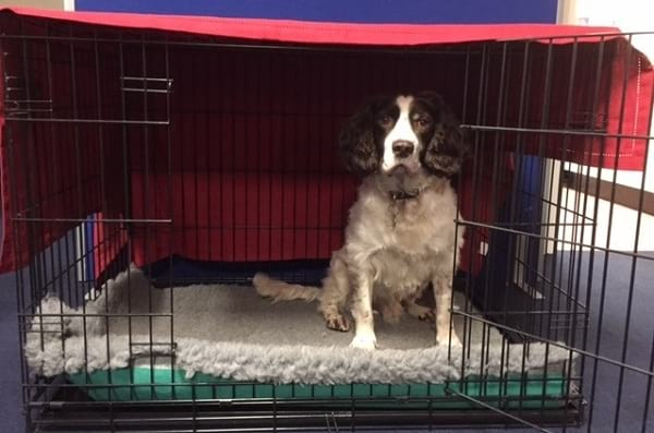 Positive Crate Training For Dogs