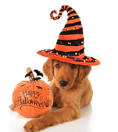 Halloween can be a spooky time of year for our pets too!