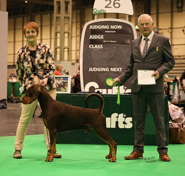 Harri the Dobermann winning best in show