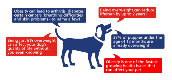 Fact about obesity in dogs