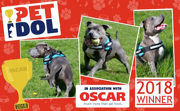 Winner of the Pet Idol 'Oscars' competition