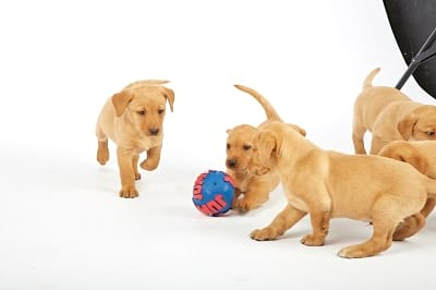 Puppies playing with a ball
