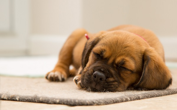 Developing puppies need plenty of sleep