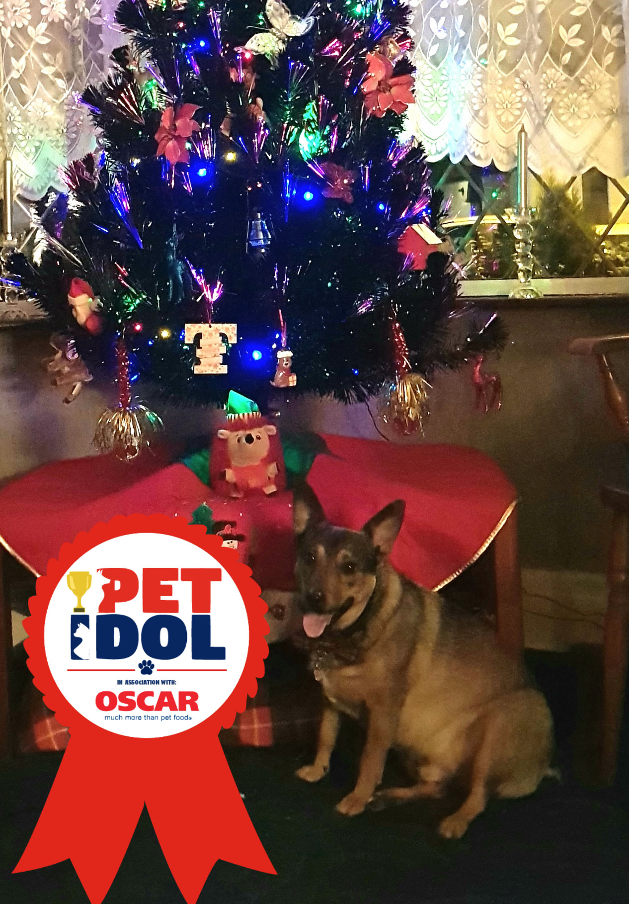 Pet Idol Christmas Special